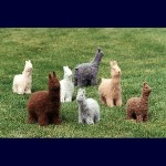 Fiber Trends Felt Alpacas & Llamas FT-207